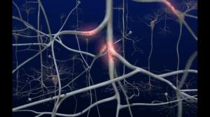 Zenuwcellen in beeld gebracht door Molshots